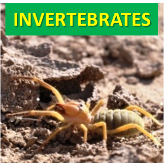 Afghanistan Invertebrates