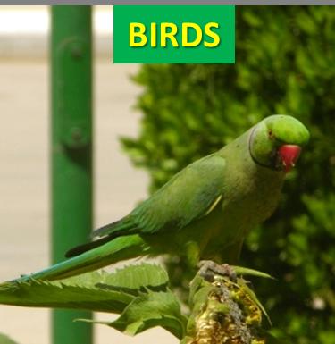 Saudi Birds