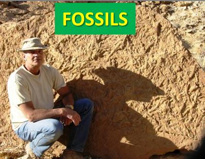 Saudi Fossils