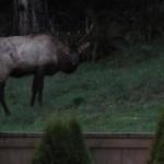 Spooky Elk