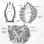 SpongeDiagram1