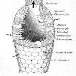 SpongeDiagram2