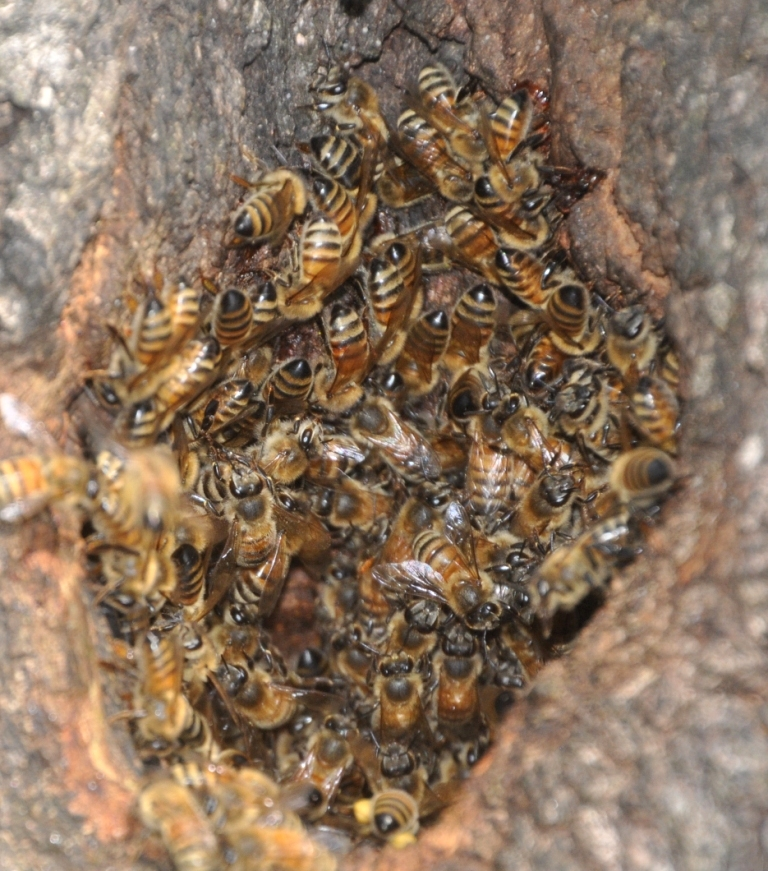 Honey bee workers